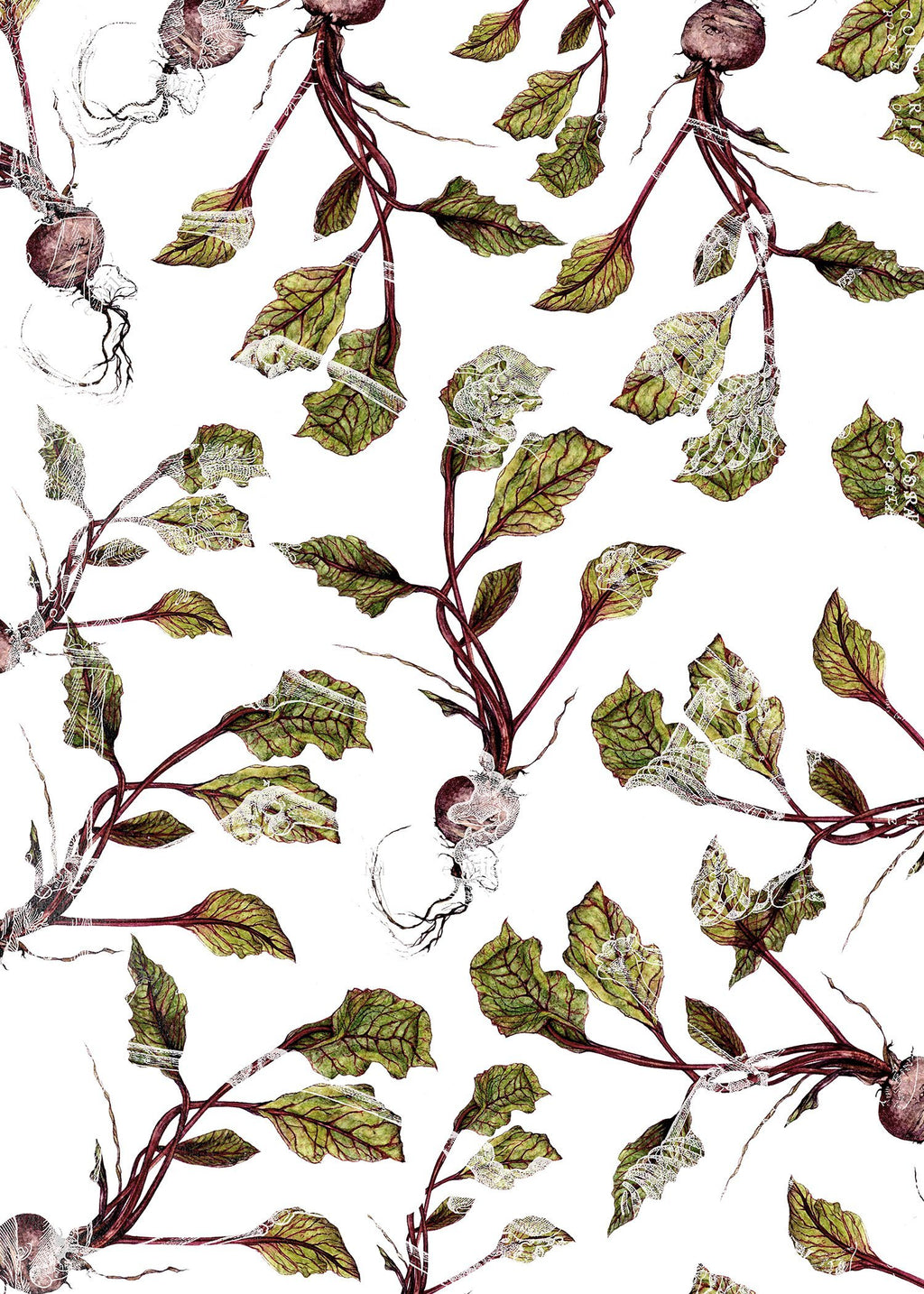Botanical Beetroot Print