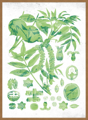 Vintage Walnut Botanical Green Print