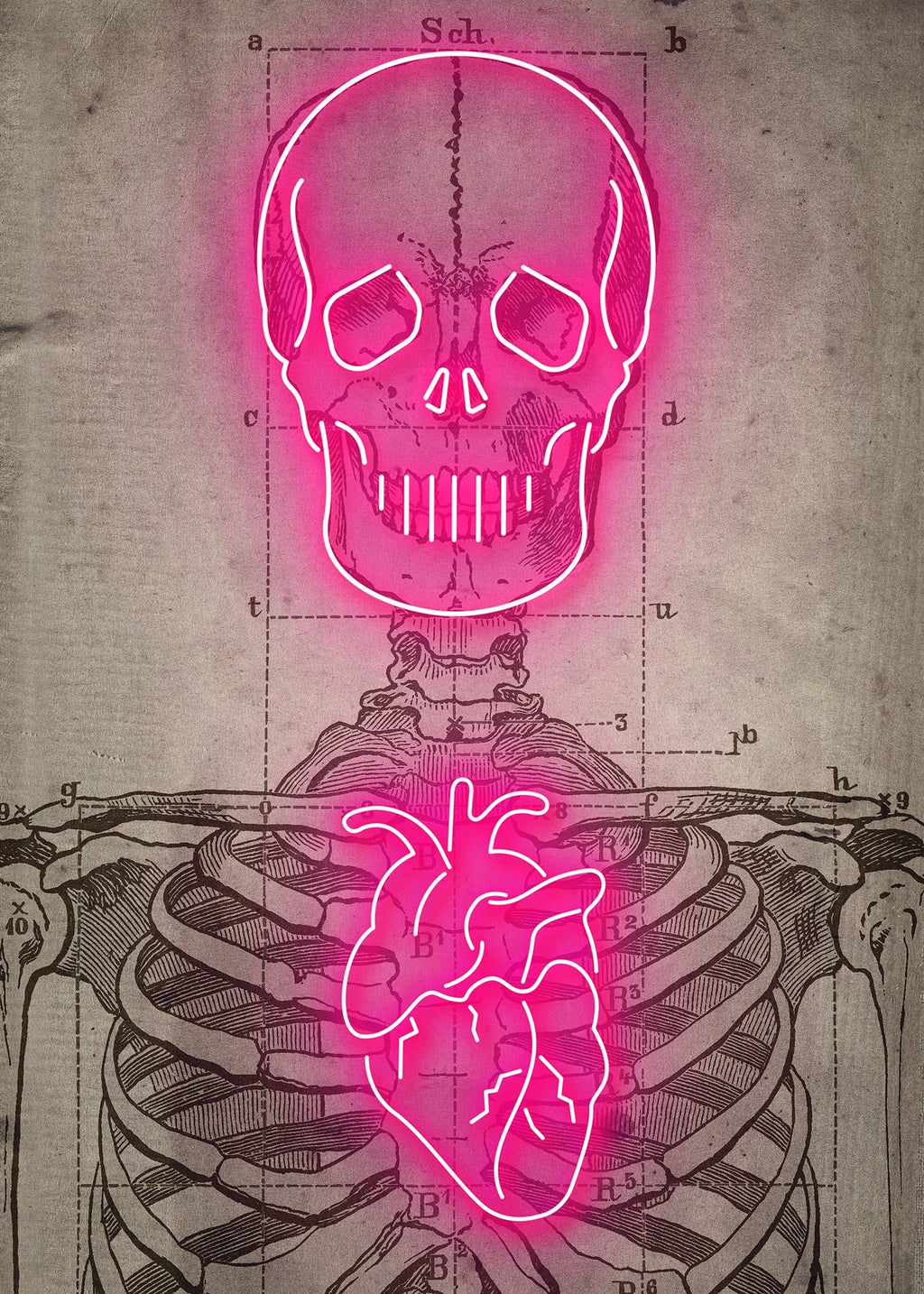 Neon Skeleton Vintage Diagram Print