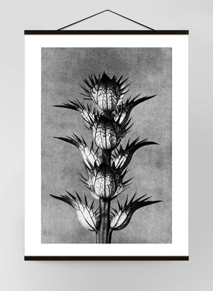 Vintage Botanical Study 2 Black & White Canvas