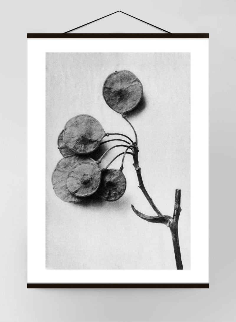 Vintage Botanical Study 4 Black & White Canvas