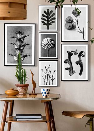 Vintage Botanical Study 6 Black and White Art Print