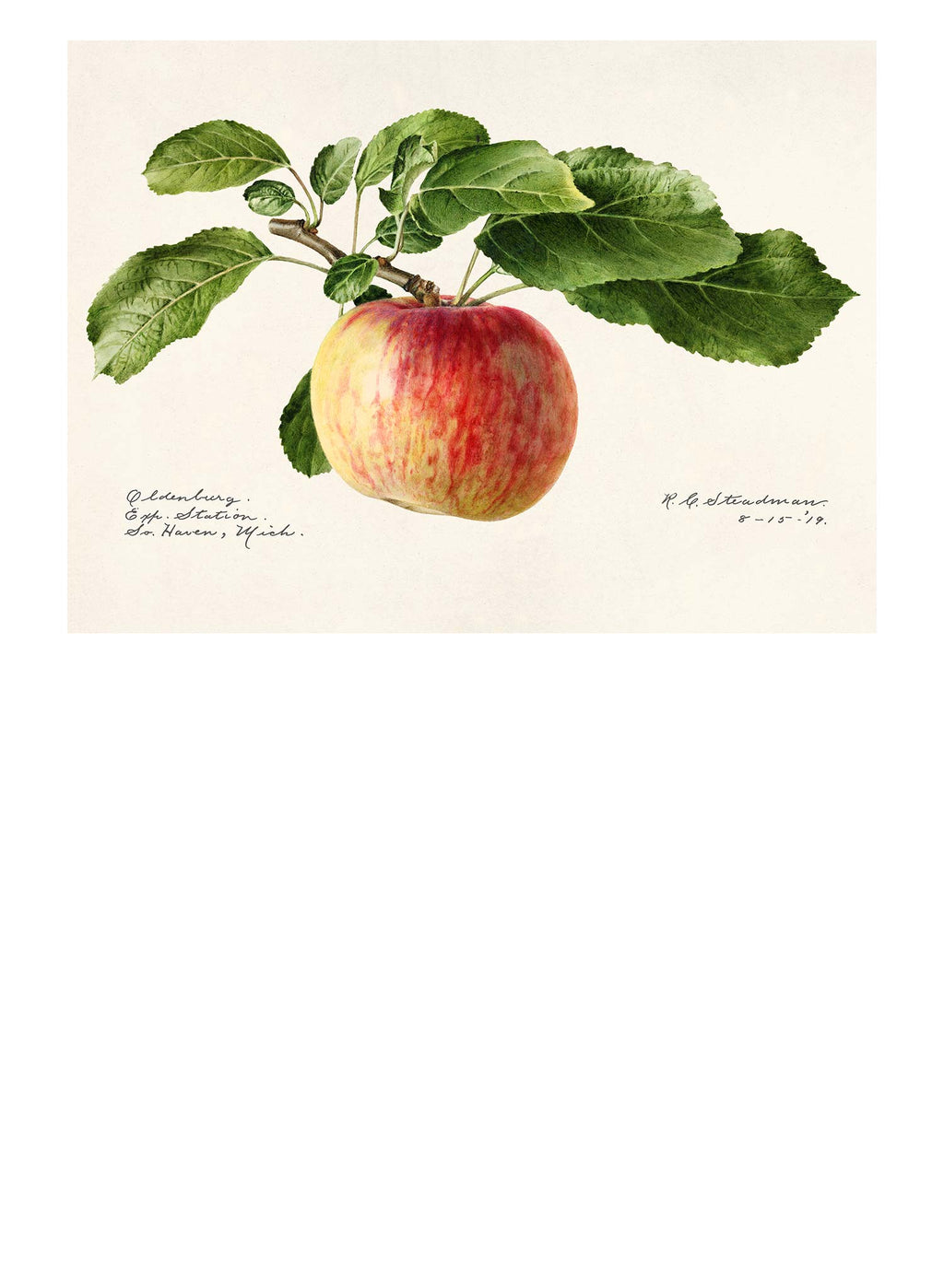 Apple Landscape Vintage Antique Print