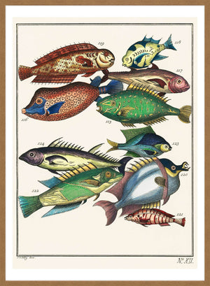 Fish 2 Vintage Antique Print