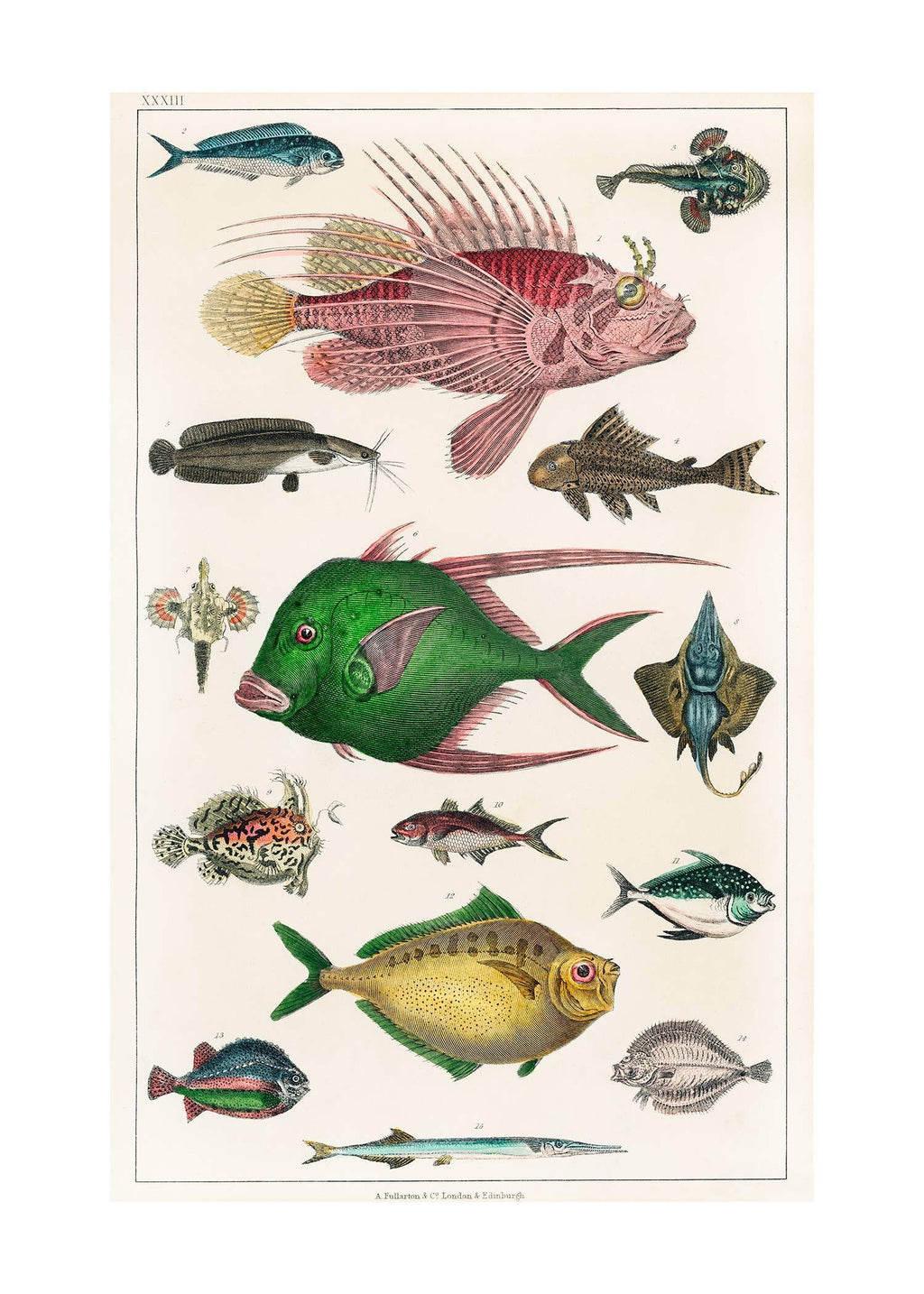 Fish 3 Vintage Antique Print