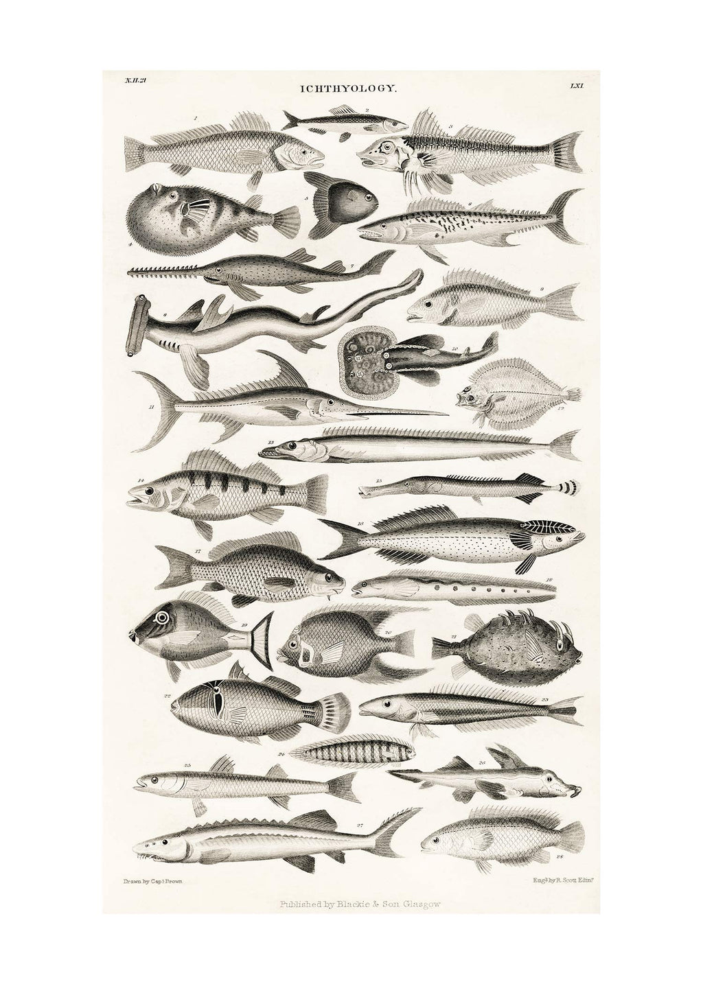 Fish Chart Vintage Antique Print