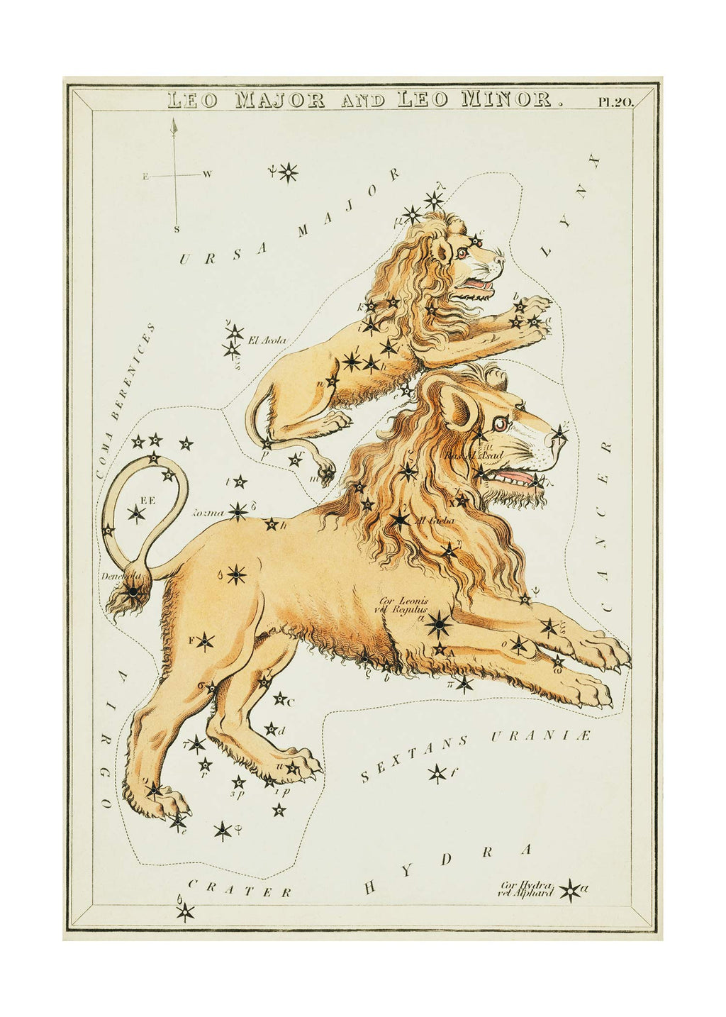Leo Major And Leo Minor Astrology Antique Print