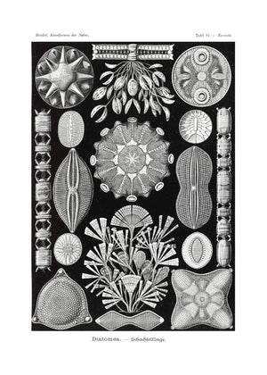 Marine Life Black and White Vintage Antique Print