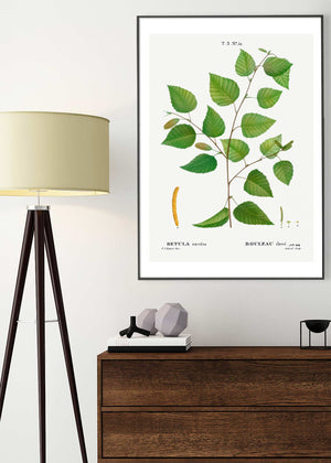 Paper Birch Branch Leaves Antique Print