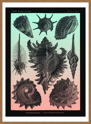 Sea Shells Pink and Green Vintage Antique Print