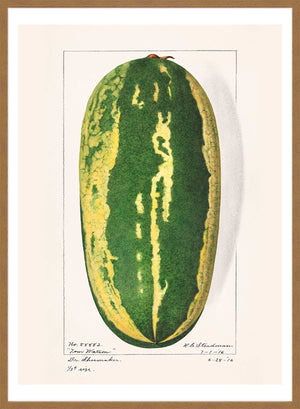 Watermelon Antique Vintage Fruit Print