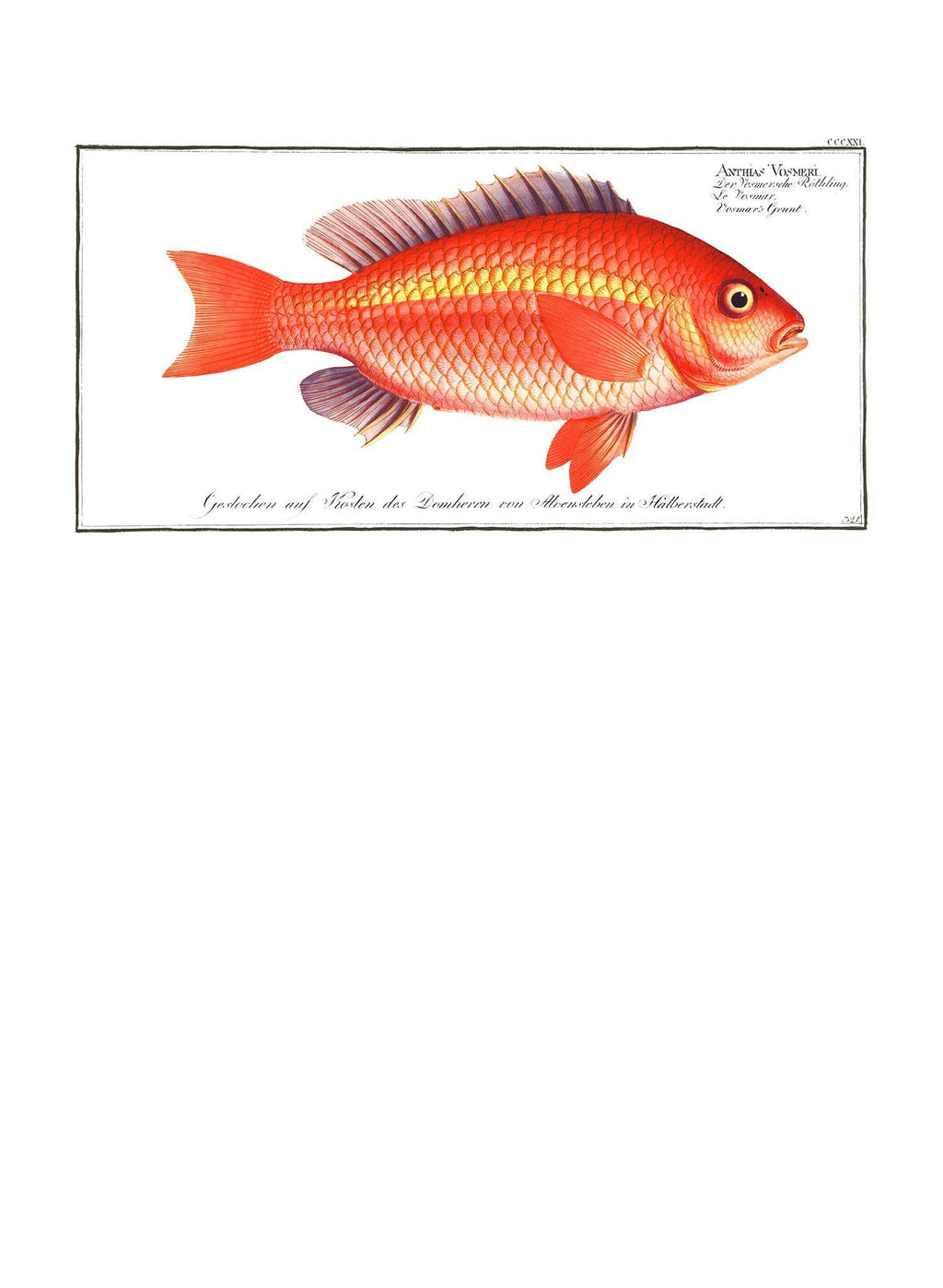 Goldfish Antique Vintage Print
