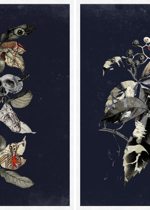 Botanical Skulls Print Bundle