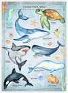 Vintage Style Sea Creatures Chart Educational Print