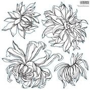 NEW: Chrysanthemum Stamps PREORDER