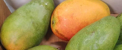 Mixed Jamaican St. Julian (Julie) Mangoes & 3 East Indian Mangoes  (USA Only)