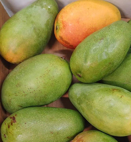 Mixed Jamaican St. Julian (Julie) Mangoes & 6 East Indian Mangoes  (USA Only)