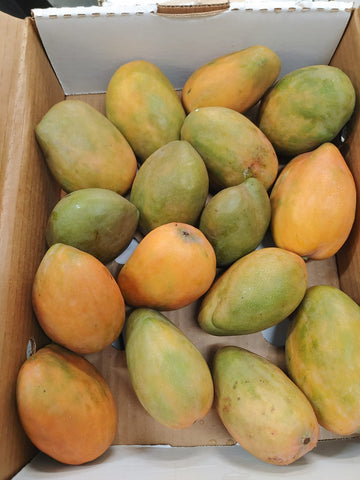 JAMAICAN MANGOES COMBO PACK - East Indian & St. Julian (Julie) Mangoes (USA Only)