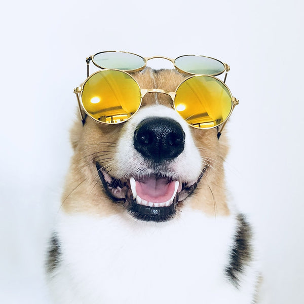 Medium Large Dog Glasses