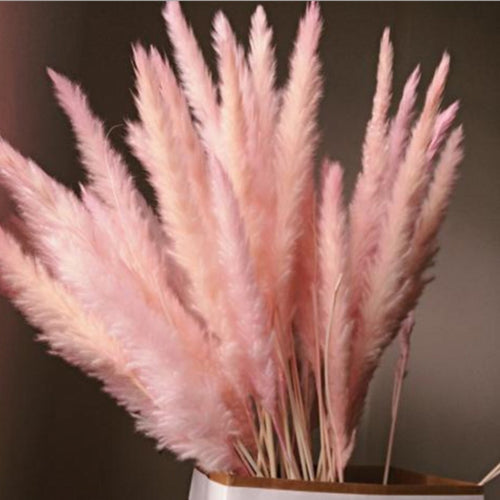 15PCS Natural Dried Small Pampas Grass Phragmites Communis,Wedding Flower Bunch 40 to 68 cm Tall for Home Decor - PampasPalace