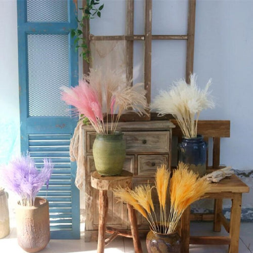 15Pcs/Bunch 3 Colors Natural Dried Small Pampas Wedding Home Decor Reed Grass Dried Natural Phragmites Flowers Bouquets - PampasPalace