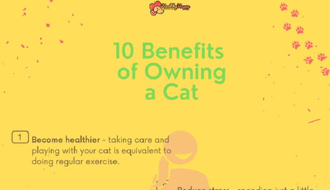 10 Benefits of Owning a Cat 01