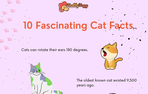 10 Fascinating Cat Facts 01
