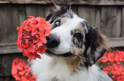 21 Plants that are Poisonous to Dogs