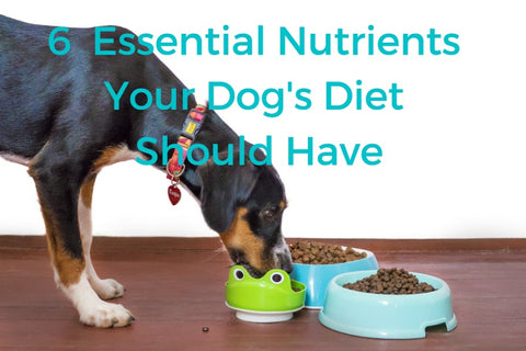 6  Essential Nutrients Your Dog's Diet Should Have 01