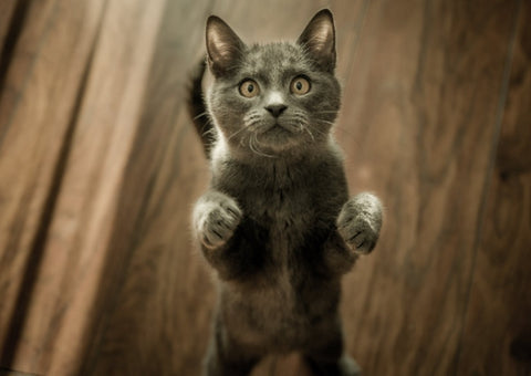 Anxiety in Cats: Causes, Symptoms, and Treatment 01