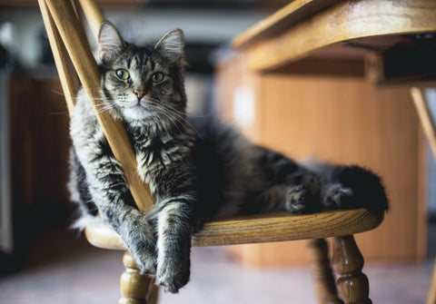 Anxiety in Cats: Causes, Symptoms, and Treatment 04