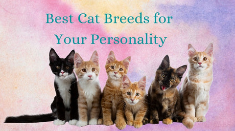 Best Cat Breeds for Your Personality