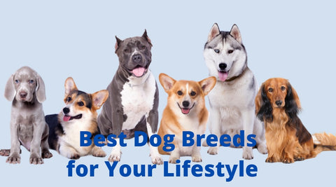Best Dog Breeds for Your Lifestyle