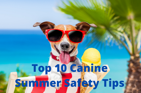 Canine Summer Tips