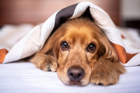 Dog Anxiety: Causes, Symptoms, and Treatment 01
