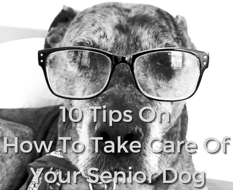 10 Tips On How To Take Care Of Your Senior Dog 01