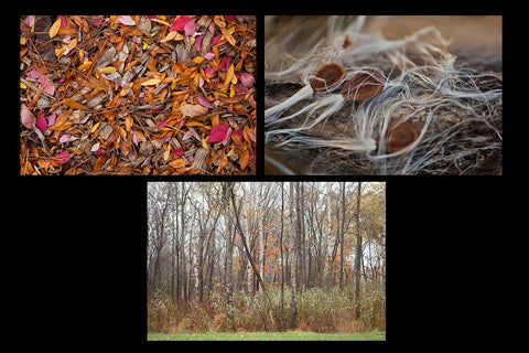 Fall Photography Greeting Cards