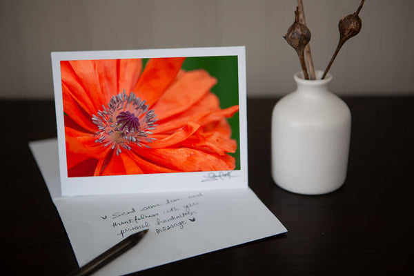Beautiful photo greeting card featuring a photo of a poppy growing in the wild photo by Laura Cook of Vision Photography