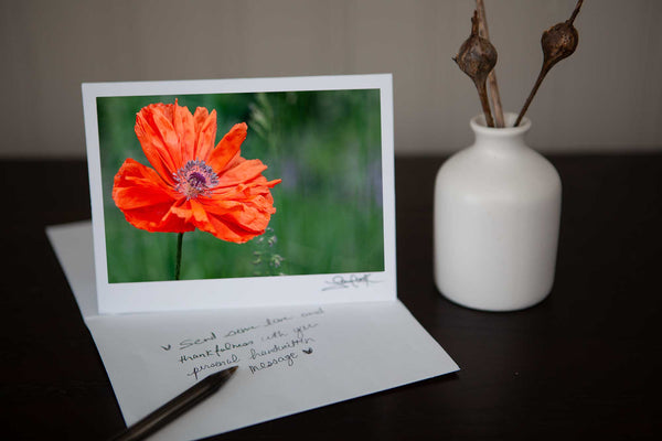 Photo greeting card featuring close up photo of a solitary poppy growing in the field