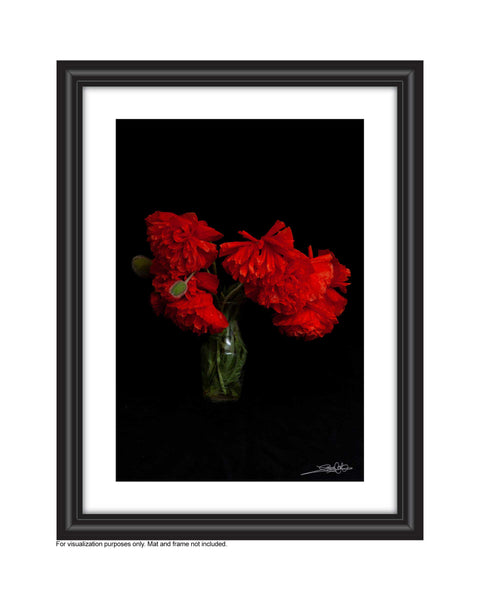 Framed , A dramatic photo of poppies in a vase photo by Laura Cook, Vision Photography