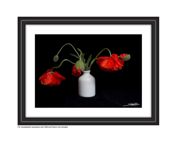 a framed photo of a bouquet of poppies . Photo by Laura Cook of Vision Photography
