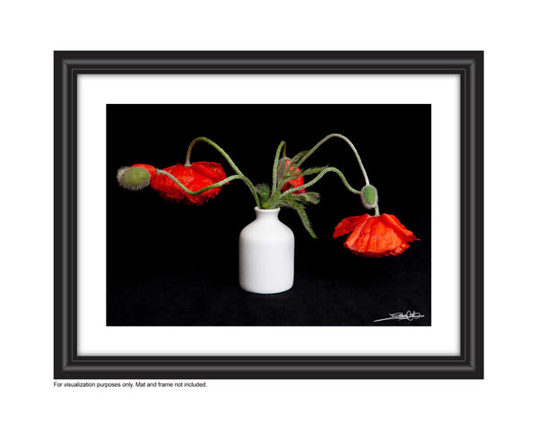 Framed photo of Small bouquet of poppy wildflowers, photo by Laura COok of Vision Photography