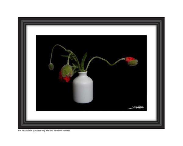 a framed photo of a small bouquet of bidding poppies in a vase , photographed by Laura Cook Vision Photography
