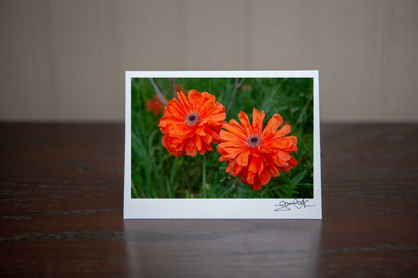 photo greeting card featuring a close up photo of 2 poppies gowing wild in a filed. Photo by Laura Cook of Vision Photography