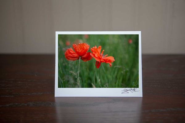 photo greeting cad of 2 poppies growing in  the field. It has a whimsical vibe to it. Photo by Laur aCook of VIsion Photography