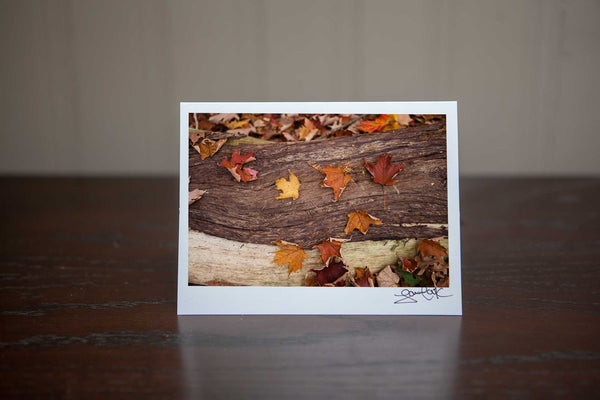 "Photography Greeting card featuring ""Slumber"" a close up view of fall maple leaves on bark in the forest in the autumn Photo by Cambridge Ontario Photographer Laura Cook of Vision Photography"