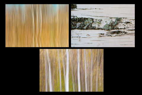 Photo greeting card pack showcasing vibrant abstract and close up photos of birch trees in the fall Photo by Cambridge Ontario Photographer Laura Cook of Vision Photography