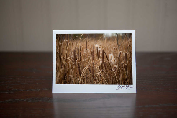 "Photography Greeting card featuring ""Bullrushes"" a close up view of bullrushes in the fall Photo by Cambridge Ontario Photographer Laura Cook of Vision Photography"