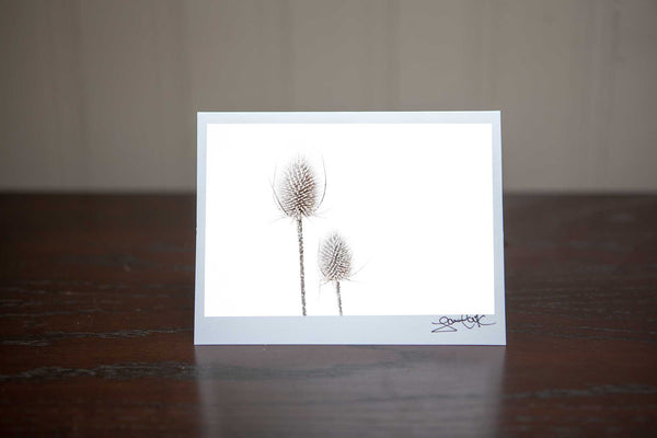 photo greeting card perfect for christmas featuring the image 'Sleeping Beauties' two frosted teasels in a snowy white wintery field Photo by Cambridge Ontario Photographer Laura Cook of Vision Photography