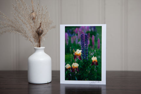 photo greeting card of purple lupines in the garden with yellow and purple iris. The 4x6 photo is mpounted to white cardstock and signed by the artist Laura Cook in the bottom right corner.